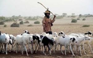 Fulani Shepherd